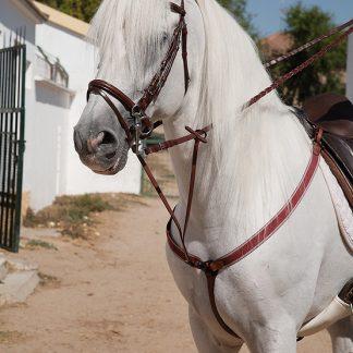 Complementos para caballo